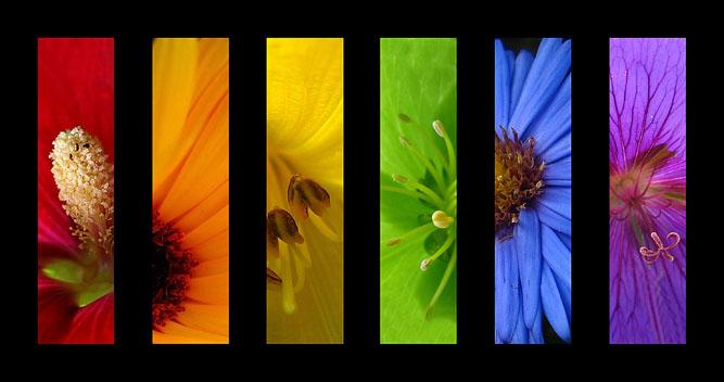 Flower-Rainbow-